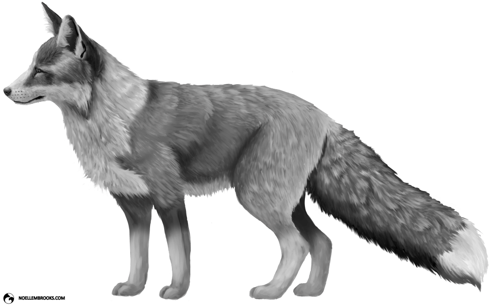 Platinum-Colored Red Fox