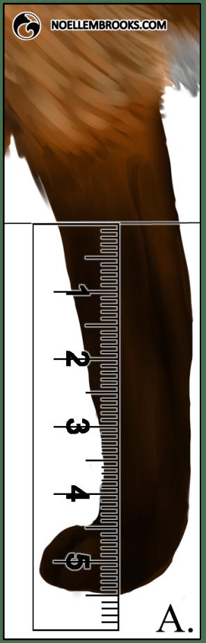 Red Fox Leg Length Calculations - A