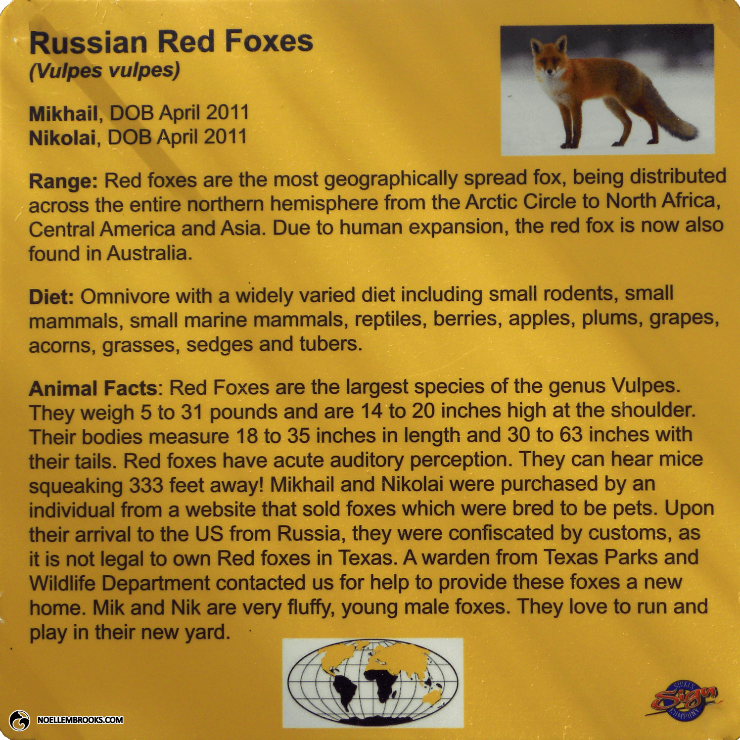 Austin Zoo and Animal Sanctuary Russian Red Foxes Informational Sign.