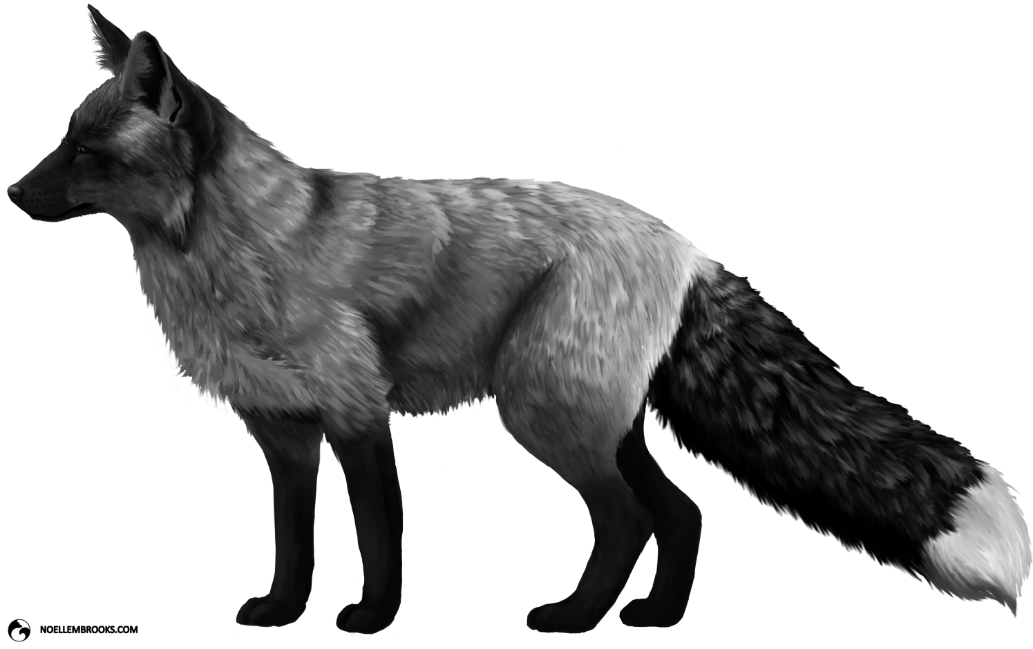 Silver-Colored Red Fox