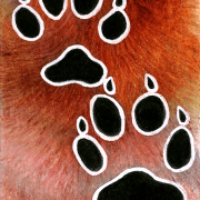 art arts artsy artwork artworks artist artistic image images picture pictures project projects series create creates creative realism realistic detail details detailed soft shading shades gradient gradients draw drawing drawings paint paints painting paintings mixed media mixedmedia colored coloured color colour pencil pencils prsimacolor primsacolors prisma primas crayon crayons white gel pen ink inks line lines linework work animal animals kingdom animalia wildlife nature afoot track tracks footprint footprints hoofprints hoofprints feet foot pattern fur scale scales skin marking markings feather feathers fin fins hand hands claw claws pawprint pawprints paw print prints