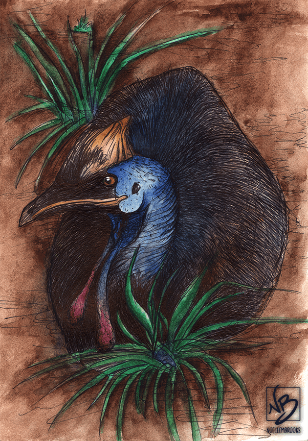 cassowary, bird, birds, watercolor, watercolors, watercolour, watercolours, painting, paintings, paint, ink, inks, pen, ballpoint pen, drawing, drawings, animal, animals, wildlife, nature, realism, realistic, noellembrooks, noelle m brooks, noelle brooks, art, illustration, illustrations, portrait, portraits, portraiture
