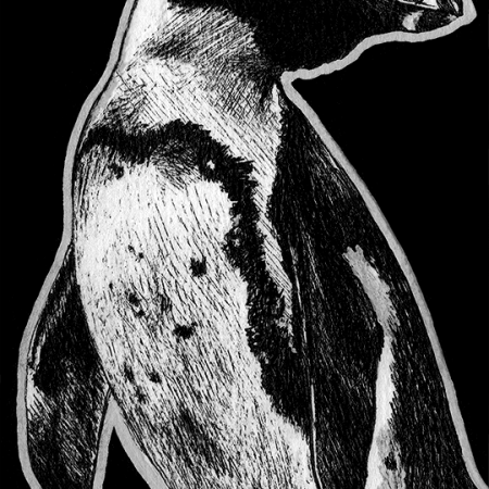 penguin, penguins, african penguin, standing, full-body, full body, looking behind, ink, inks, pen, pens, ballpoint pen, ballpoint pens, realism, realistic, animal, animals, wildlife, nature, achromatic, black and white, black, white, grey, gray, noelle, noelle brooks, noellebrooks, noelle m brooks, noellembrooks, art, series, drawing, drawings, picture, pictures, illustration, illustrations, portrait, portraits