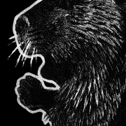 beaver, beavers, rodent, rodents, profile, side-view, side view, sitting, ink, inks, pen, pens, ballpoint pen, ballpoint pens, realism, realistic, animal, animals, wildlife, nature, achromatic, black and white, black, white, grey, gray, noelle, noelle brooks, noellebrooks, noelle m brooks, noellembrooks, art, series, drawing, drawings, picture, pictures, illustration, illustrations, portrait, portraits