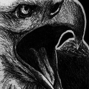 bald eagle, bald eagles, eagle, eagles, screeching, mouth open, close-up, closeup, 4th of july, fourth of july, independence day, usa, united states of America, America, bird, birds,ink, inks, pen, pens, ballpoint pen, ballpoint pens, realism, realistic, animal, animals, wildlife, nature, achromatic, black and white, black, white, grey, gray, noelle, noelle brooks, noellebrooks, noelle m brooks, noellembrooks, art, series, drawing, drawings, picture, pictures, illustration, illustrations, portrait, portraits