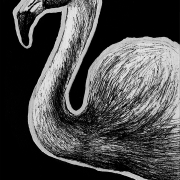 flamingo, flamingos, chilean flamingo, profile, side, standing, leg up, western capercaillie, pheasant, bird, birds, flying, wings out, mouth open, full body, ink, inks, pen, pens, ballpoint pen, ballpoint pens, realism, realistic, animal, animals, wildlife, nature, achromatic, black and white, black, white, grey, gray, noelle, noelle brooks, noellebrooks, noelle m brooks, noellembrooks, series, drawings, pictures, portrait, portraits