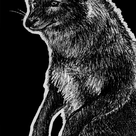 dhole, dholes, asian wild dog, wild dog, wild dogs, dog, dogs, canine, canines, jumping, jump, jumps, floating, ink, inks, pen, pens, ballpoint pen, ballpoint pens, realism, realistic, animal, animals, wildlife, nature, achromatic, black and white, black, white, grey, gray, noelle, noelle brooks, noellebrooks, noelle m brooks, noellembrooks, art, series, drawing, drawings, picture, pictures, illustration, illustrations, portrait, portraits