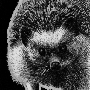 hedgehog, front, frontal, face, standing, cute, ink, inks, pen, pens, ballpoint pen, ballpoint pens, realism, realistic, animal, animals, wildlife, nature, achromatic, black and white, black, white, grey, gray, noelle, noelle brooks, noellebrooks, noelle m brooks, noellembrooks, art, series, drawing, drawings, picture, pictures, illustration, illustrations, portrait, portraitsink inks ballpoint pen draw drawing drawings image images picture pictures art arts artsy artwork artworks artist artistic project projects series create creates creative black and white achromatic monochromatic monochrome animal animals kingdom animalia wildlife nature art artist trading card cards white-out white out whiteout witeout wite-out wite portrait portraits portraiture profile profiles realism realistic detail details detailed dark high contrast shadows shadow shadowed art