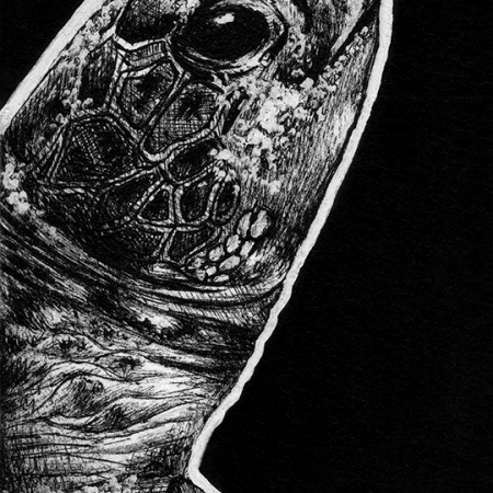 green turtle, turtle, turtles, side, profile, face, close-up, close up, ink, inks, pen, pens, ballpoint pen, ballpoint pens, realism, realistic, animal, animals, wildlife, nature, achromatic, black and white, black, white, grey, gray, noelle, noelle brooks, noellebrooks, noelle m brooks, noellembrooks, art, series, drawing, drawings, picture, pictures, illustration, illustrations, portrait, portraits