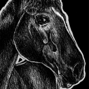 horse, horses, face, close-up, close up, ink, inks, pen, pens, ballpoint pen, ballpoint pens, realism, realistic, animal, animals, wildlife, nature, achromatic, black and white, black, white, grey, gray, noelle, noelle brooks, noellebrooks, noelle m brooks, noellembrooks, art, series, drawing, drawings, picture, pictures, illustration, illustrations, portrait, portraits