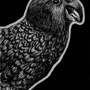 kea, parrot, bird, birds, standing, side, profile, mouth open, beak open, smiling, ink, inks, pen, pens, ballpoint pen, ballpoint pens, realism, realistic, animal, animals, wildlife, nature, achromatic, black and white, black, white, grey, gray, noelle, noelle brooks, noellebrooks, noelle m brooks, noellembrooks, art, series, drawing, drawings, picture, pictures, illustration, illustrations, portrait, portraits