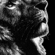 lion, lions, congo lion, looking up, face, close-up, close up, profile, regal, elegant, ink, inks, pen, pens, ballpoint pen, ballpoint pens, realism, realistic, animal, animals, wildlife, nature, achromatic, black and white, black, white, grey, gray, noelle, noelle brooks, noellebrooks, noelle m brooks, noellembrooks, art, series, drawing, drawings, picture, pictures, illustration, illustrations, portrait, portraits