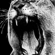lion, lions, west African lion, African lion, western African lion, roar, roaring, face, close-up, closeup, mouth open, teeth showing, yawn, yawning, ink, inks, pen, pens, ballpoint pen, ballpoint pens, realism, realistic, animal, animals, wildlife, nature, achromatic, black and white, black, white, grey, gray, noelle, noelle brooks, noellebrooks, noelle m brooks, noellembrooks, art, series, drawing, drawings, picture, pictures, illustration, illustrations, portrait, portraits