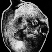 ocean sunfish, sunfish, fish, derp, mouth open, side, profile, full-body, full body, ink, inks, pen, pens, ballpoint pen, ballpoint pens, realism, realistic, animal, animals, wildlife, nature, achromatic, black and white, black, white, grey, gray, noelle, noelle brooks, noellebrooks, noelle m brooks, noellembrooks, art, series, drawing, drawings, picture, pictures, illustration, illustrations, portrait, portraits
