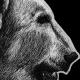 polar bear, polar bears, bear, bears, ink, inks, pen, pens, ballpoint pen, ballpoint pens, realism, realistic, animal, animals, wildlife, nature, achromatic, black and white, black, white, grey, gray, noelle, noelle brooks, noellebrooks, noelle m brooks, noellembrooks, art, series, drawing, drawings, picture, pictures, illustration, illustrations, portrait, portraits