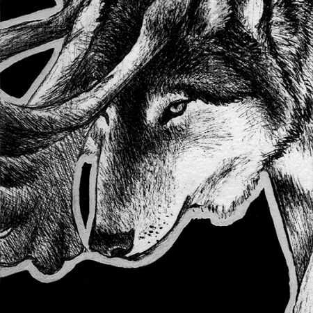 gray wolf, wolf, wolves, reindeer, antlers, mythical, creature, walking, crouched, crouching, face, front, frontal, close-up, close up, ink, inks, pen, pens, ballpoint pen, ballpoint pens, realism, realistic, animal, animals, wildlife, nature, achromatic, black and white, black, white, grey, gray, noelle, noelle brooks, noellebrooks, noelle m brooks, noellembrooks, art, series, drawing, drawings, picture, pictures, illustration, illustrations, portrait, portraits