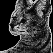 serval, servals, cat, cats, big cat, big cats, kitty, ink, inks, pen, pens, ballpoint pen, ballpoint pens, realism, realistic, animal, animals, wildlife, nature, achromatic, black and white, black, white, grey, gray, noelle, noelle brooks, noellebrooks, noelle m brooks, noellembrooks, series, drawings, pictures, portrait, portraits