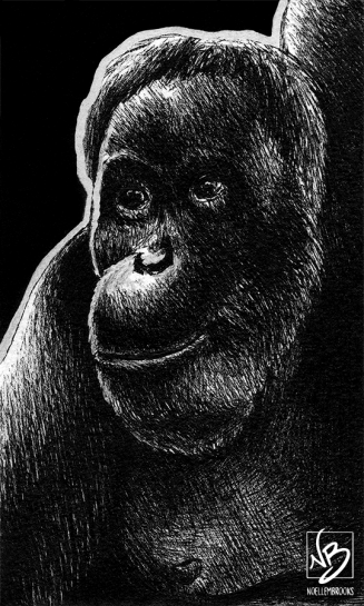 Sumatran orangutan, orangutan, primate, ape, leaning, hanging, face, ink, inks, pen, pens, ballpoint pen, ballpoint pens, realism, realistic, animal, animals, wildlife, nature, achromatic, black and white, black, white, grey, gray, noelle, noelle brooks, noellebrooks, noelle m brooks, noellembrooks, art, series, drawing, drawings, picture, pictures, illustration, illustrations, portrait, portraits
