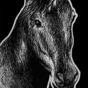 unicorn, unicorns, mythical, creature, horse, front, frontal, close-up, close up, ink, inks, pen, pens, ballpoint pen, ballpoint pens, realism, realistic, animal, animals, wildlife, nature, achromatic, black and white, black, white, grey, gray, noelle, noelle brooks, noellebrooks, noelle m brooks, noellembrooks, art, series, drawing, drawings, picture, pictures, illustration, illustrations, portrait, portraits