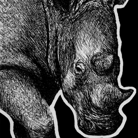 white rhinoceros, rhinoceros, rhino, rhinos, walking, walks, standing, stands, from front, ink, inks, pen, pens, ballpoint pen, ballpoint pens, realism, realistic, animal, animals, wildlife, nature, achromatic, black and white, black, white, grey, gray, noelle, noelle brooks, noellebrooks, noelle m brooks, noellembrooks, art, series, drawing, drawings, picture, pictures, illustration, illustrations, portrait, portraits