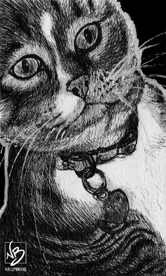cat, cats, kitty, kitties, kittycat, kitty cat, kitty-cat, pet, pets, face, front, frontal, close-up, close up, ink, inks, pen, pens, ballpoint pen, ballpoint pens, realism, realistic, animal, animals, wildlife, nature, achromatic, black and white, black, white, grey, gray, noelle, noelle brooks, noellebrooks, noelle m brooks, noellembrooks, art, series, drawing, drawings, picture, pictures, illustration, illustrations, portrait, portraits