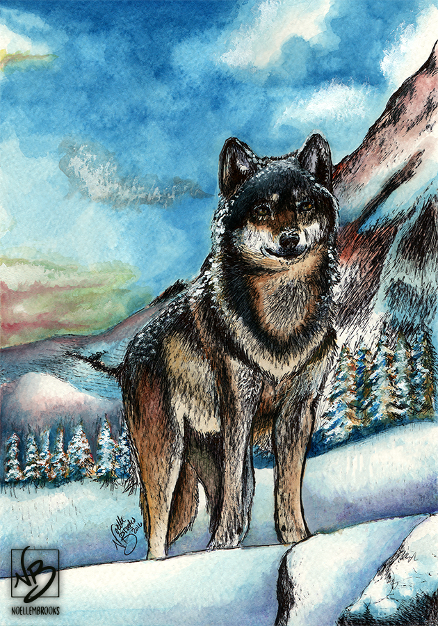 gray wolf, gray wolves, grey wolf, grey wolves, wolf, wolves, watercolor, watercolors, watercolour, watercolours, painting, paintings, paint, ink, inks, pen, ballpoint pen, drawing, drawings, animal, animals, wildlife, nature, realism, realistic, noellembrooks, noelle m brooks, noelle brooks, art, illustration, illustrations, portrait, portraits, portraiture