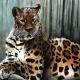 jaguar, jaguars, big cat, big cats, watercolor, watercolors, watercolour, watercolours, painting, paintings, paint, ink, inks, pen, ballpoint pen, drawing, drawings, animal, animals, wildlife, nature, realism, realistic, noellembrooks, noelle m brooks, noelle brooks, art, illustration, illustrations, portrait, portraits, portraiture