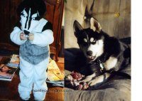 Siberian Husky Costume Archives - Noelle O Designs ...