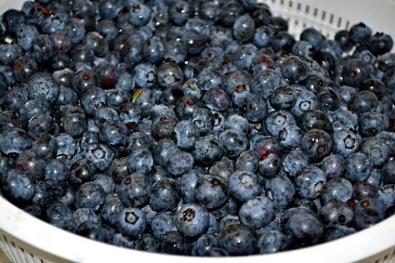 Berry from blueberry farm
