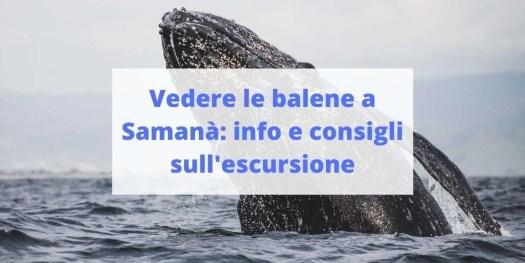 escursione delle balene a Samanà