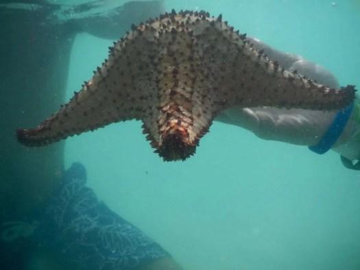 ammirare le stelle marine durante l'escursione all'isola di Saona