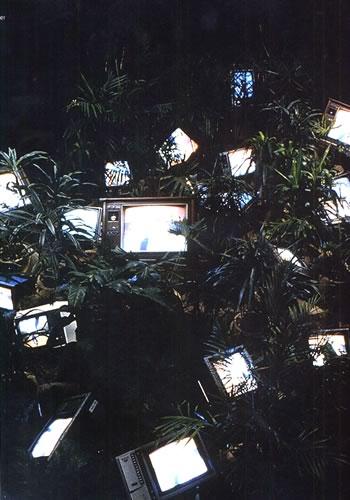 Tv Garden