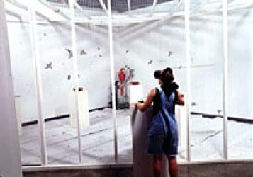 Fig.9, vista dall'esterno della gabbia