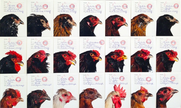 The Cosmopolitan Chicken Project