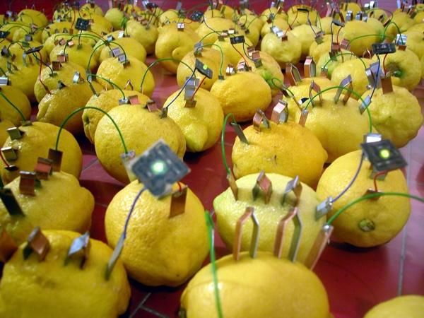 Ennio Bertrand, Cielo di Limoni (Lemon Sky), Bio-installation, 2003
