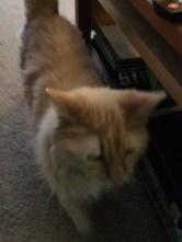 Preston, Faith's fluffy little guy.