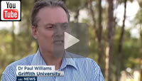 ABC News Qld: Dr Paul Williams from Griffith University predict a Labor win and a swing of 10 per cent.