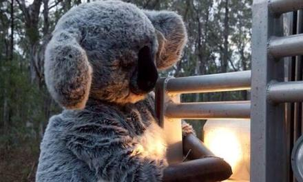 The futility and the joy of the #leardblockade last stand: @margokingston1 Twitter report
