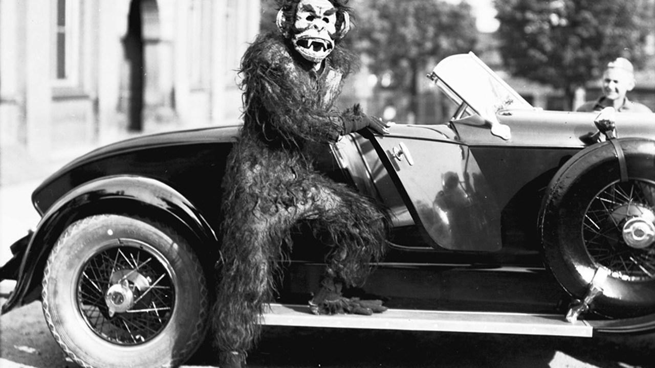Buen día gorilas