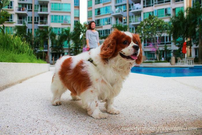 Cavalier King Charles Spaniel, Jamie Chan, Blogger, Dog