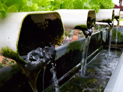 Hydroponics, farming, green, plant