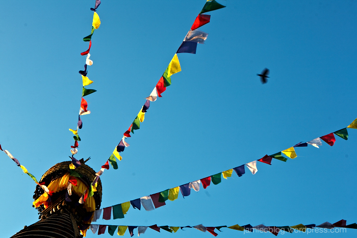 Kathmandu, bird, Jamie Chan, No Foreign Lands, Travel Blogger, Visual Storyteller