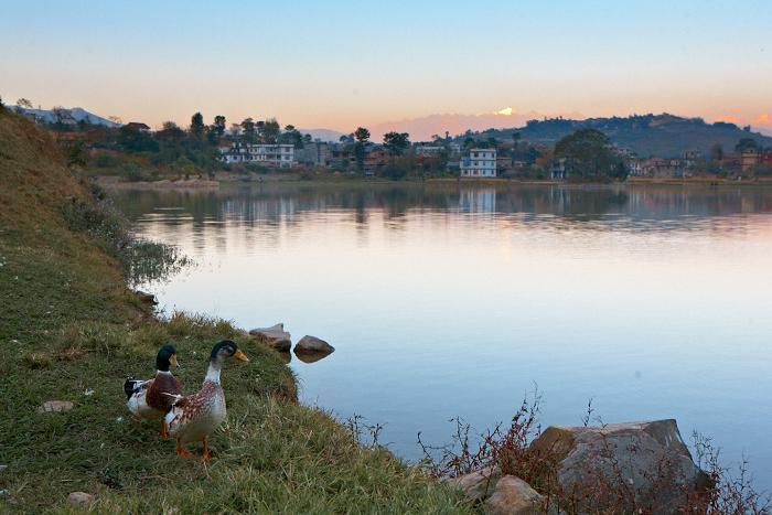 Kathmandu, Ducks, No FOreign Lands, Travel Blogger, Jamie Chan