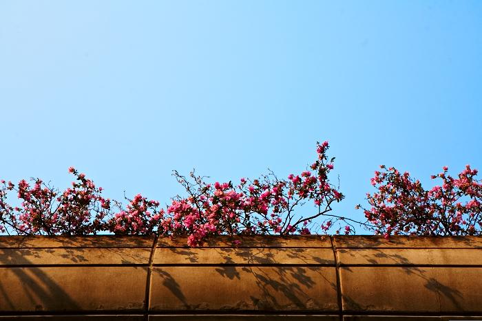 Flowers, Singapore, Light, Jamie Chan, No Foreign Lands, Travel Blogger