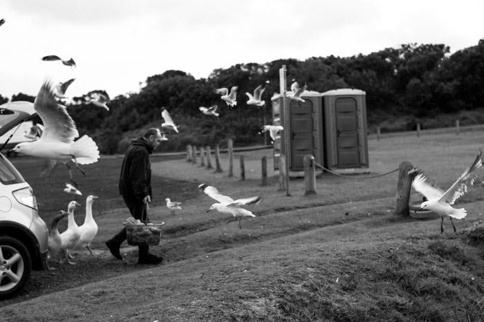 gulls, seagulls, man, monochrome, Great ocean road