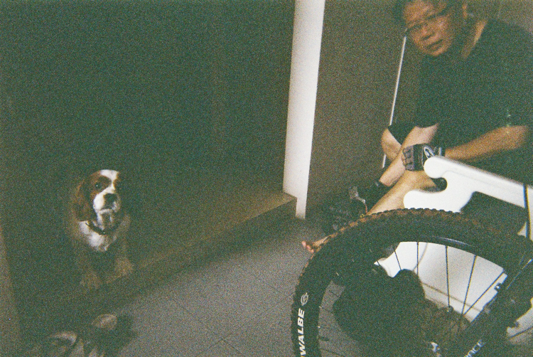 cavalier king charles, film, disposable camera