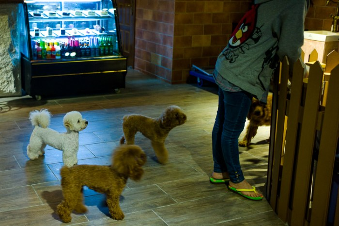 Slaughter house, shanghai, spring airlines, jamie chan, no foreign lands, leica, dog café