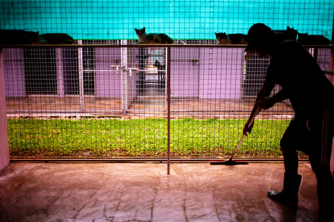 Youth Shooting Home, Jamie Chan, The story behind, Animal Shelter
