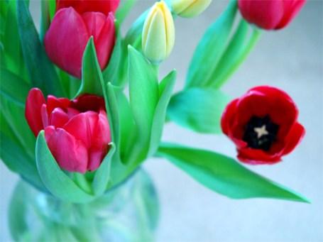TripodGirl_tulip_dreams3_500