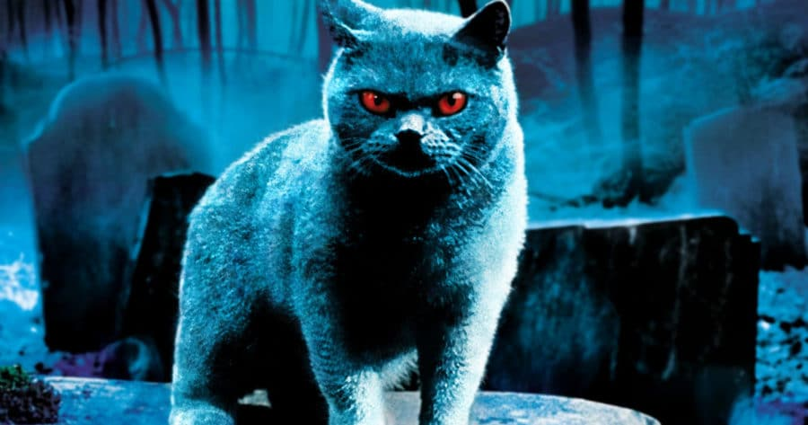 Celebrate National Cat Day With 10 of Horror's Purrfect Felines